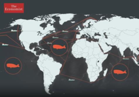 Vídeo de Michel André publicat a 'The Economist': Com la contaminació acústica amenaça la vida dels oceans