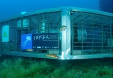 La UPC, a través del observatorio OBSEA, forma parte del primer Comité Español de Observaciones Oceanográficas